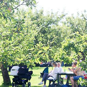 【北欧さんぽ】スウェーデン1:りんごの木の下で、自家製パンにオーガニック野菜も。