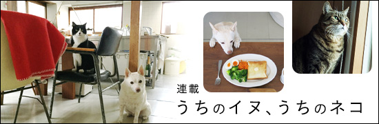 うちのイヌ、うちのネコの画像