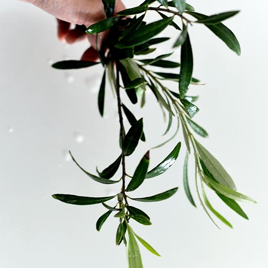 【店長コラム】花屋に行かなくても、飾れる植物はベランダやリビングにあるかも?