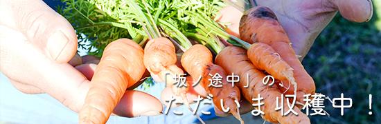 坂ノ途中の「ただいま収穫中!」の画像