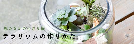 空き瓶で楽しむ、テラリウムの作り方や栽培のコツの画像