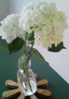 クラシノート-植物とお花のある暮らしー 【愛知県・ふりかけおにぎり様】