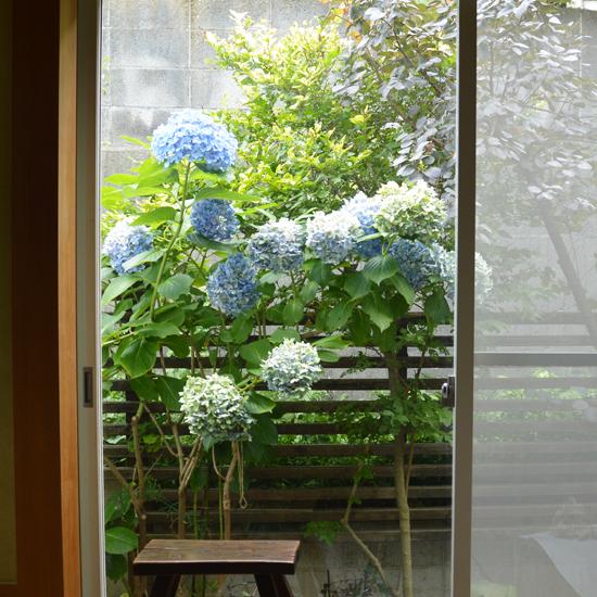 特集|フィットする暮らしのつくり方vol.03 平井かずみさん編 第4話『お庭とベランダ、愛用道具』