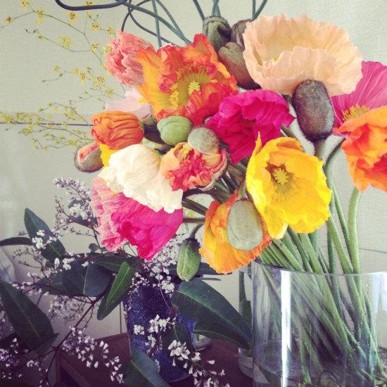 連載|socukaの、花日和。 第1回『春の始まりに / ポピー』