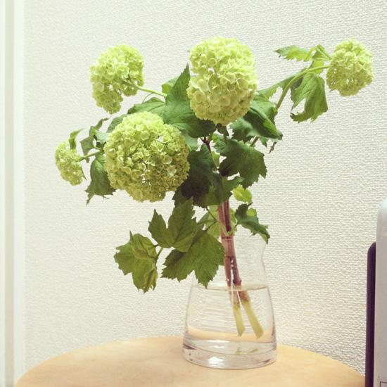 連載|socukaの、花日和。 第7回『初夏の風 / ドウダンツツジ』