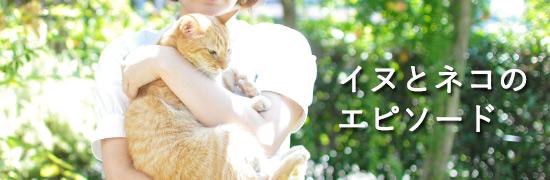 イヌとネコのエピソード