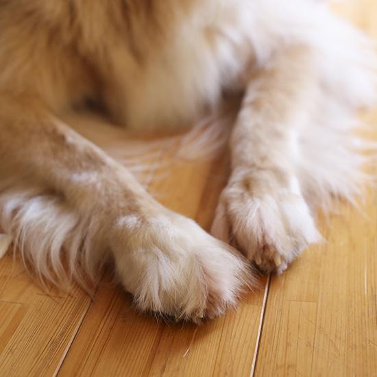 【イヌとネコのエピソード】第2話:家族みんなの事を誰よりも知っているアリス