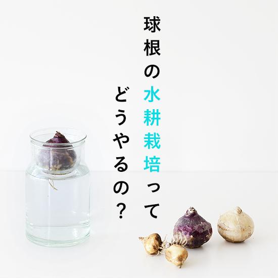 socuka_kyukon_2_DSC_5206