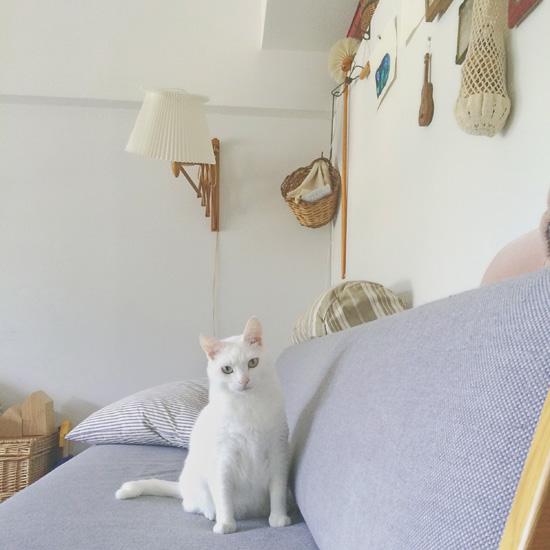 【我が家のイヌとネコ】第5話:幸運を運ぶカギしっぽ、人が大好きな白猫・コティ。