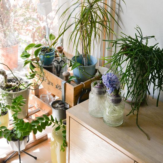 【スタッフのアイデア帖】スタッフ宅の観葉植物、何を選びどう飾っている?