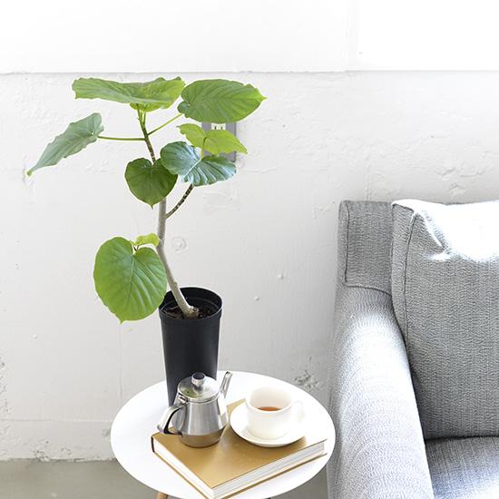 【観葉植物の選び方・育て方】第1話:キーワードは耐陰性、ワンルームやリビングにおすすめの植物4選