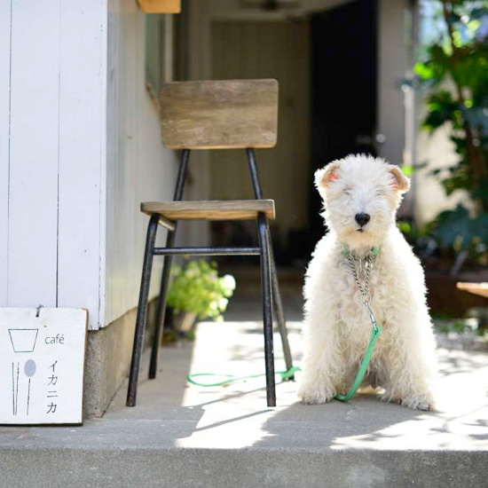 dog_hirai_012