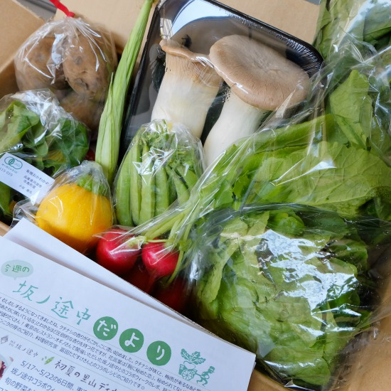 【ただいま収穫中!】保存方法がポイント? 野菜をおいしく食べきるための、基本のき。