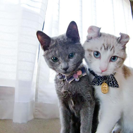 【我が家のイヌとネコ】第11話:疲れたとき、モヤモヤした気分のとき、2匹のネコに癒されています。
