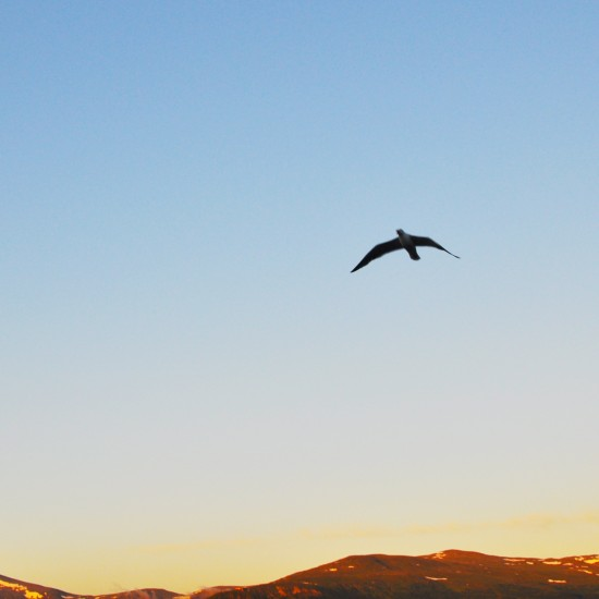 【ノルウェー日記】一日中沈まない、真夜中の太陽。