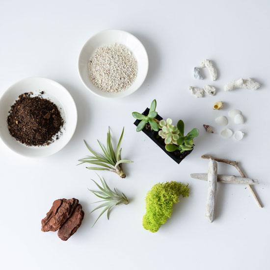 【瓶のなかの小さな庭】第1話:100円ショップにある材料やガラス瓶で、テラリウムを手づくり!土や植物の選びかたも。