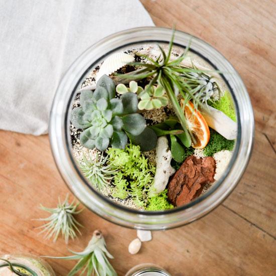 【瓶のなかの小さな庭】第3話:エアプランツ・多肉植物を寄せ植えしたい!テラリウムの作り方
