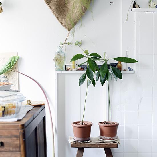 【私たちの常連店】京都「swiss coffee,plants」後編:人々が集うその理由って?