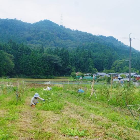 【ただいま収穫中!】都会暮らしから農家へ。「食べてくれる人」を思う、野菜づくり