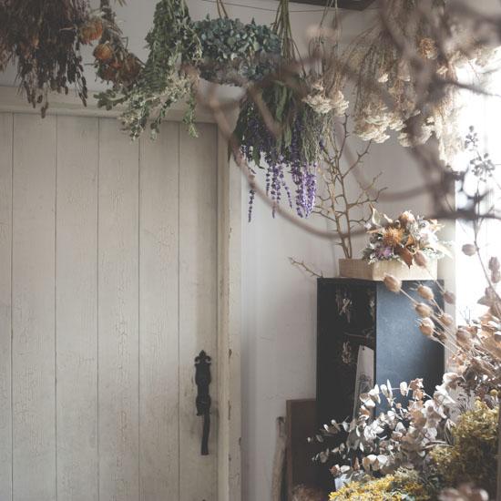 dryflower_033
