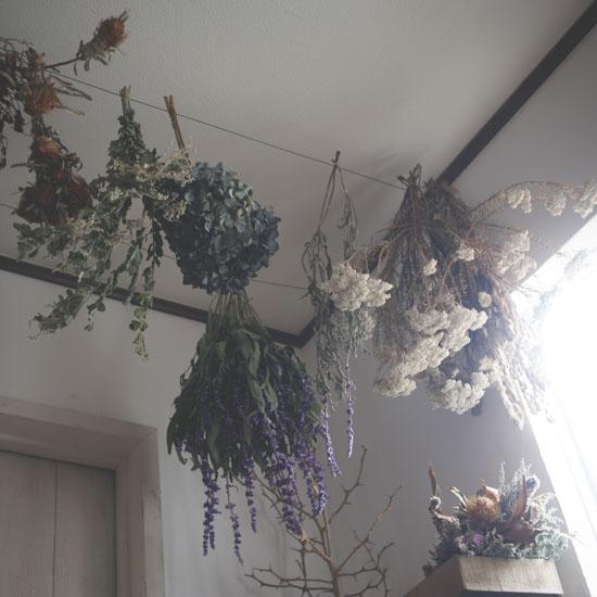 dryflower_031