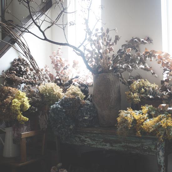 dryflower_032