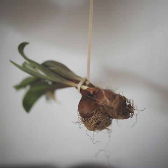 dryflower_021