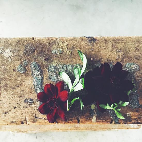 【LINE限定】チョコレートの香りがする花とは?限定の読みもの更新中です。