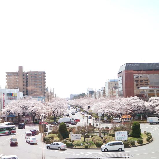 【クラシコムの社員食堂】満開の桜を眺めながらの社食となりました!