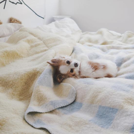 【うちのイヌ、うちのネコ】第1話:負けん気は強いけれど、冬になると甘えん坊。よしいちひろさんとoimoの暮らし