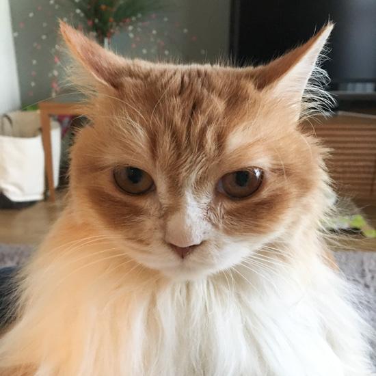 【うちのイヌ、うちのネコ】うつろな眼差しとスローな動き。マイペースな元地域猫のチャッピー