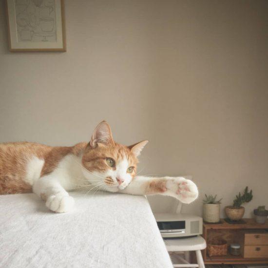 【うちのイヌ、うちのネコ】ユニット名は、みたらし団子と白玉ぜんざい!? 校正者・牟田さんとふたりの猫たち