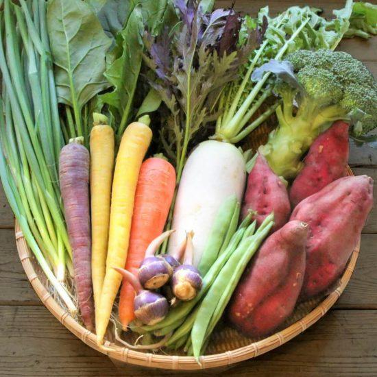 【ただいま収穫中!】野菜をおいしく使うために。冷蔵庫の余り野菜を一掃するコツって?