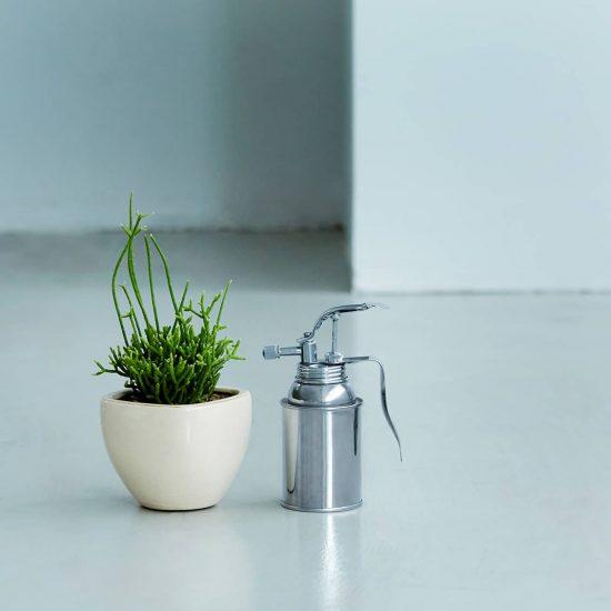 【多肉植物の育て方】04:水やりは夕方から夜にかけて? 多肉植物の水やりのポイント
