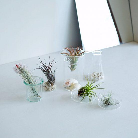 【まとめ】:手軽なグリーン「エアプランツ」を長く愛するための育て方・飾り方アイデア集