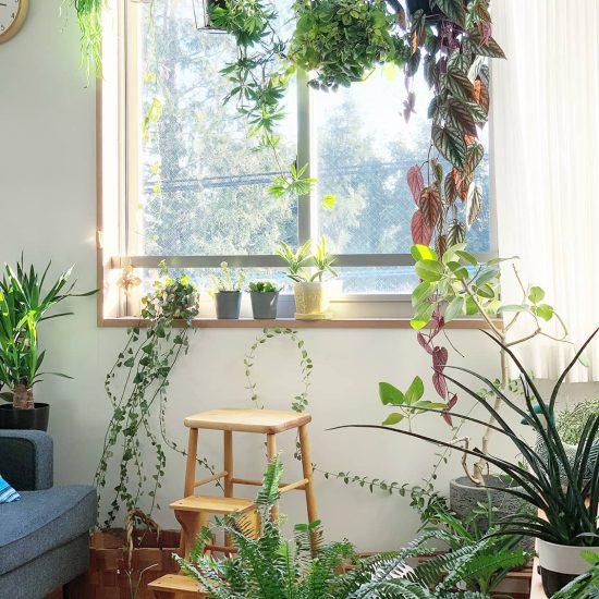 【店長コラム】インテリアと植物の良い関係。そして『青葉家のテーブル』の現場裏話。