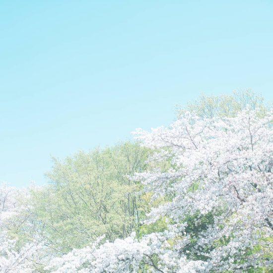 【隣の芝が青くても】後編:悩みは、あなただけの「特別な視点」