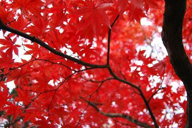 秋の東京帰省